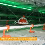 Braadkippen Waterer van de Haven van de landbouw de Automatische Voor Kippen