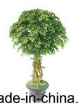 Piccoli bonsai decorativi falsi