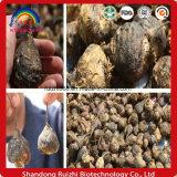 20:1 10:1 порошка корня Maca высокого качества поставкы фабрики естественное с свободно образцом для человека