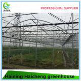 Serre chaude agricole avec le système croissant hydroponique