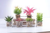 선물을%s 바위를 가진 가짜 물을%s 가진 유리제 화병에 있는 선인장 그리고 Succulent