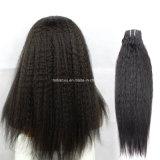 Della fabbrica parrucca del merletto dei capelli umani direttamente 100% (FDX-YY-KBL)