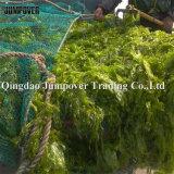 Het organische Uittreksel Fertilizerseaweed bevordert de Groei van de Installatie