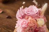 Ivenran ha conservato il fiore fresco per il giorno del biglietto di S. Valentino