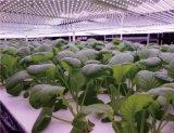 AC100-240V LED wachsen helles Gefäß für Zierpflanzen