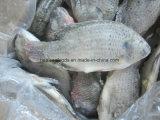 Bevroren Uitgehaalde & Geschraapte Tilapia Vissen