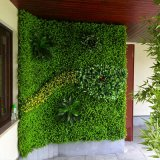 Paredes artificiales imperecederas de las plantas, pared vertical de la decoración de la hierba