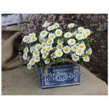 Гальванизированный плантатор цветка Flowerpot цветочного горшка сада олова Rect
