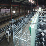 Light Prefab Steel Frames Cow Horse Barns for Sale