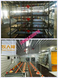 Broiler automatico Machines nel mandriano di Poultry Shed From Super