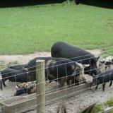 Galvaznied wickelte Draht-Vieh-Bauernhof-archivierten Zaun ein