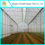Vendendo cintas agriculturais dos vegetais da estufa