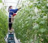 Professionelle hohe Pflanzen 800W LED wachsen für bessere Ernte hell