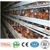 Machine automatique d'enlèvement d'engrais de cage de poulet d'usine