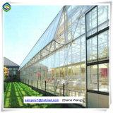 Serra commerciale della serra di vetro professionale con il buon sistema di raffreddamento