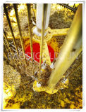 Indicatore luminoso solare dell'assassino dell'insetto della mosca di agricoltura