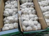 Alho fresco (mercado de Japão)