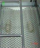 Mouleur de pain grillé de matériel de traitement au four pour faire le pain de pain grillé, pain de Philippines (constructeur, CE reconnus)