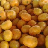 Fornitore di Golde del mandarino dolce del bambino