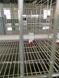 Système galvanisé de cage de volaille pour la ferme de poulet
