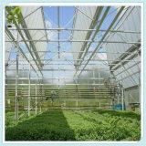 다중 경간 토마토 온실