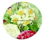 새로운 디자인 Eco-Friendly 처분할 수 있는 종이 접시