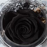 빛에 있는 Ivenran 까만 로즈 신선한 꽃