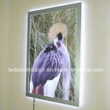 Advertizing Display를 위한 달무리 Acrylic Sheet LED Crystal Light Box