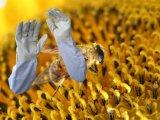 Перчатка пчеловодства втулки холстины естественной кожи козочки цвета белая