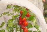 Housses couvertures croissantes d'une tomate de Tomates