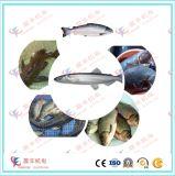 رتبة عادية عادية سمكة تغذية كريّة طينيّة مطحنة آلة