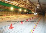 Strumentazione personalizzata del pollame per produzione della griglia con la tettoia di allevamento del pollo