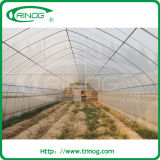 Vegetableのための安い低価格Tunnel Greenhouse