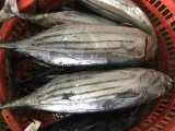 Surtidor del bonito en los pescados congelados China del bonito para la venta