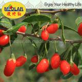 Níspero secado orgánico de Goji Berry