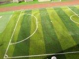 Het Kunstmatige Gras van twee Stekel voor het Gebied van de Voetbal