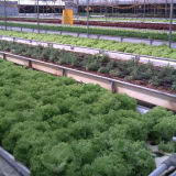 Serres chaudes hydroponiques de contrôleurs et systèmes hydroponiques commerciaux pour la production végétale