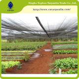 ライト級選手が付いている農業の透過HDPEのプラスチック網