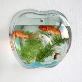 De creatieve AcrylMuur die van de Appel de MiniTank van Vissen hangen