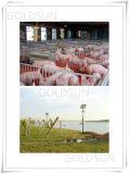 中国の太陽動力を与えられたはえの害虫のカのキラーランプ、安全、環境