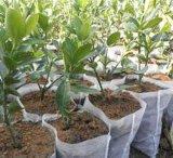 Non-Woven para a proteção agricultural