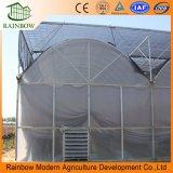 Estufa Plástica Multi-Span de Plástico Agrícola para Vegetais Crescentes