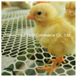 Nuovo Type Chick Brood Cage per The Chicken Farm (blocco per grafici di A)