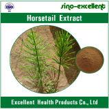 Polvere naturale dell'estratto del Horsetail di 100%