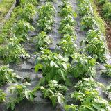 高品質の庭のマット