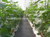 زراعيّة مبلمر [ويد] غطاء أسود بلاستيكيّة أرض تغذية