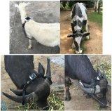 Fonte de alimentação impermeável do painel solar do perseguidor do GPS do recipiente Ultra-Longo dos carneiros da vaca da potência solar da vida da bateria, Pin magnético forte RF-V26