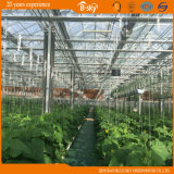 Hohes Yield Glass Greenhouse für Agricultural Planting