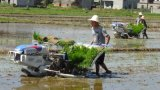 Filas manuales de la máquina 4 de Filipinas de la repicadora del arroz de Kubota