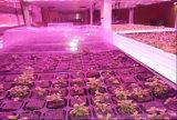 完全なスペクトル4FT T8 LEDのプラントは野菜のために軽く育つ